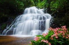Cascata di Mandang, Tailandia, fiore Fotografie Stock Libere da Diritti