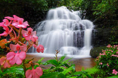 Cascata di Mandang, Tailandia, fiore Immagine Stock Libera da Diritti