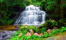 Cascata di Mandang, Tailandia, fiore Fotografia Stock Libera da Diritti