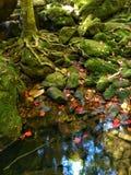 Cascata di Phukradung Fotografia Stock