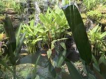 Cascata di pietra tropicale con il pesce operato di Koi o della carpa e piante tropicali immagini stock libere da diritti