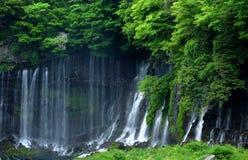 Cascata di Shiraito Fotografia Stock