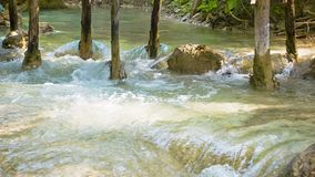 Cascata di si di Kouang, Laos, Luang Prabang L'acqua versa sopra suolo calcareo fra i tronchi di albero Fotografia Stock