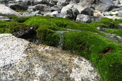 cascata e raggruppamento Muschio-coperti Il bei muschio e lichene hanno coperto la pietra BAC immagini stock