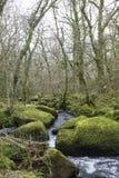 Cascata e rocce muscose a Becky Falls, Devon immagini stock libere da diritti