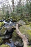 Cascata e rocce muscose a Becky Falls, Devon immagine stock libera da diritti