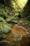 Cascata e vortice in foresta profonda Fotografia Stock