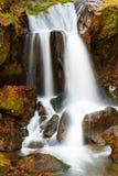 Cascata in foresta Fotografia Stock