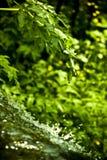 Cascata in foresta Immagini Stock