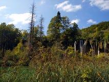 Cascata in foresta. Laghi Plitvice, Croazia. fotografie stock libere da diritti