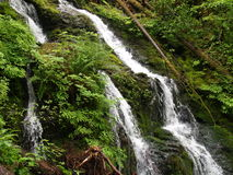 Cascata in foresta olimpica, Washington State, U.S.A. Immagine Stock