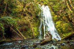 Cascata in foresta pluviale, parco nazionale olimpico Fotografia Stock