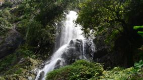 Cascata in foresta pluviale tropicale stock footage