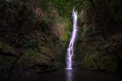 Cascata in foresta scura in Nuova Zelanda immagini stock