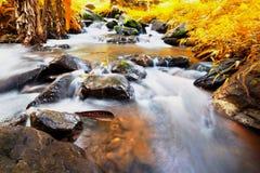 Cascata in foresta, tono caldo Fotografia Stock Libera da Diritti
