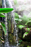 Cascata in giungla Fotografia Stock Libera da Diritti