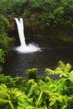 Cascata in giungla tropicale Immagini Stock