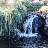 Cascata graziosa con l'albero di salice che appende sopra la cascata Fotografie Stock