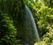 Cascata Laurisilva di Los Tilos nella foresta dell'alloro di Palma della La Immagine Stock