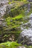 Cascata muscosa della roccia della foresta della molla in anticipo Fotografia Stock