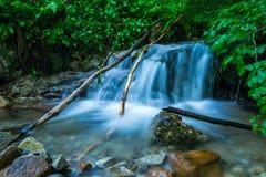 Cascata na floresta Foto de Stock