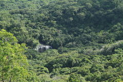 Cascata in giungla Immagine Stock Libera da Diritti