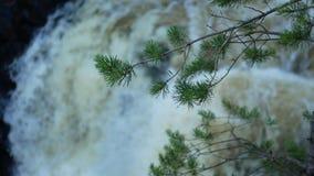 Cascata nei precedenti vaghi, ramo di albero in Front In Focus archivi video