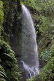 Cascata nel Los Tilos (La Palma, isole Canarie) fotografia stock libera da diritti
