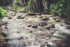 Cascata nella foresta fotografie stock libere da diritti