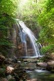 Cascata nella foresta immagini stock libere da diritti