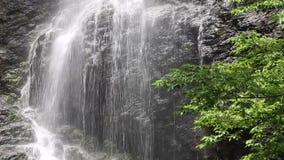 Cascata nella foresta stock footage