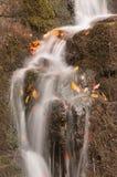 Cascata nella foresta di autunno Immagini Stock