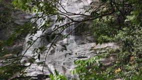 Cascata nella foresta di Tijuca stock footage
