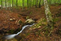Cascata nella foresta. Montseny. Immagini Stock
