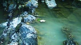 Cascata nella foresta, movimento lento della montagna stock footage