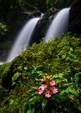 Cascata nella foresta profonda alla provincia di Phetchaboon; La Tailandia Immagine Stock