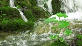Cascata nella sosta nazionale di Plitvice video d archivio