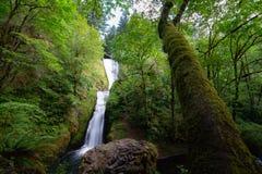 Cascata nuziale scenica di velo nell'Oregon fotografia stock