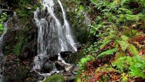 Cascata precipitante a cascata dell'acqua video d archivio