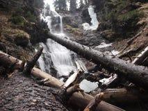 Cascata in regione selvaggia Immagini Stock