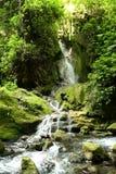 Cascata in Rio Escanela in Querétaro, México fotografia stock libera da diritti