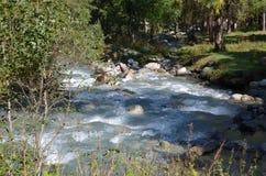 Cascata scorrente con le pietre nel fiume rapido della montagna in foresta Immagini Stock Libere da Diritti