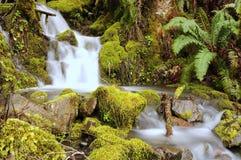 Cascata sopra le rocce muscose Fotografia Stock
