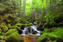 Cascata sulla torrente montano in repubblica Ceca Fotografia Stock Libera da Diritti