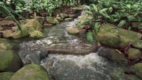 Cascata tropicale della giungla stock footage