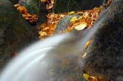 Cascata tropicale in foresta Immagini Stock Libere da Diritti