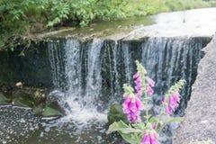 Cascata in un parco con i fiori rosa nella priorità alta Immagine Stock