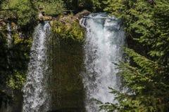 Cascata in una foresta di vecchia crescita Fotografia Stock