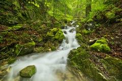 Cascata in una gola fertile nel ½ Raj, Slovacchia di Slovenskà Fotografia Stock Libera da Diritti