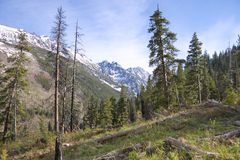 Cascatas americanas Foto de Stock